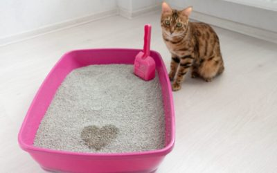 Tips To Get Your Kitty To Use Its Litter Box